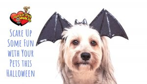 Scare Up Some Fun with Your Pets this Halloween